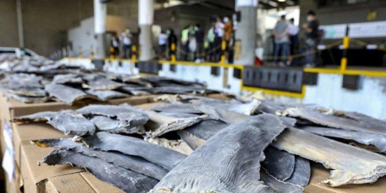 Descubren en Hong Kong un alijo récord de aletas tiburón por etiquetas en español
