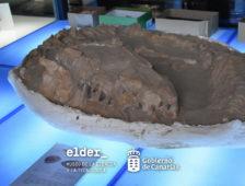 Patrimonio Cultural cede al Museo Elder un fósil de Mosasaurus, un dinosaurio de más de 65 millones de años